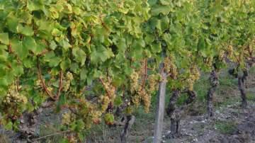 Livraison bouteilles de vin rouge en Gironde